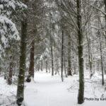 ハンブルクの森の中